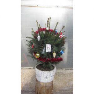 کاج نوئل کریسمس