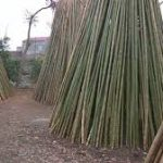 خريد چوب بامبو
